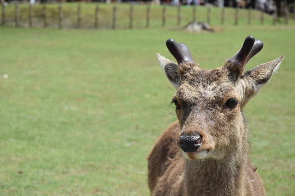 Nara parc